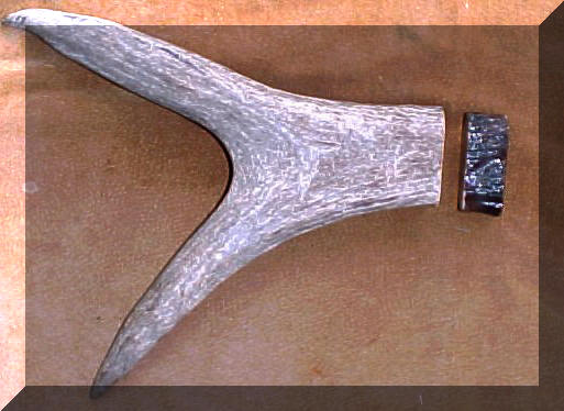 Moose antler Stabilized 111515 1